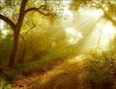 寝る前に聴く、癒し系・精神安定用BGM (