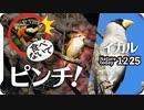 1225【モズがヤマガラ追う□イカル初遭遇】猛禽類2種ハイタカとトビ?里山寺家ふるさと村。タシギが溜池で捕食、オシドリ、アオジ、謎の鳴き声【 #今日撮り野鳥動画まとめ 】 #身近な生き物語