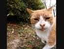 ようこそ感動猫体験チャンネルへ。この動画はチャンネル紹介的な動画です