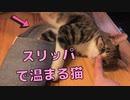 ルームシューズの温もりを知ってしまった猫がかわいい