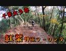 【千葉県林道】大多喜の山の中走ったら結構紅葉が綺麗だった【VOICEROID車載】