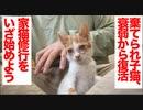 棄てられ保護子猫、回復を見せて家猫修行を開始する
