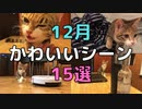 【12月ベスト!】キジ三毛猫のかわいい動画15選【2020/12】【第2回】