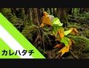 """【折り紙】「カレハタチ」 14枚【枯葉】/【origami】""""Karehatachi"""" 14 pieces【fallenleaves】"""