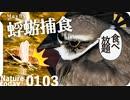 0103【野鳥が蜉蝣を捕食】猛禽類トビ滑空、ハシビロガモ飛翔、カモもシギチもセキレイも昆虫食。カワセミ喧嘩、鳩猫に襲われた?カイガラムシにユスリカカゲロウ #今日撮り野鳥動画まとめ  #身近な生き物語