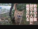 ベテラン子猫、リアル子猫時代に猫としての作法を叩き込まれる