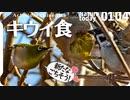 0104【キウイ食スズメジロ】セキレイ飛び捕食、猛禽類チョウゲンボウ、ネズミモチがヒヨドリムクドリに食べられる、金柑も。ヒドリガモ交尾、オオバン綱引き【 #今日撮り野鳥動画まとめ 】 #身近な生き物語