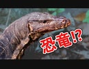 東南アジアに潜む恐竜っぽい巨大生物を探してみた!【ミズオオトカゲ】