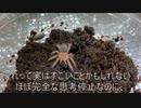 [ナナチナナナチ]タランチュラ飼育日記その57[ナナナナチ]