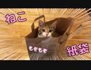 猫が紙袋に入ってモゾモゾしていました…w