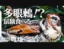 0110【鳥に食べられるネズミモチ】カワセミ捕食ホバリング。メジロの喧嘩の鳴き声とマユミ。カルガモ喧嘩?で翼怪我の悲劇。目が多いツグミ!?【 #今日撮り野鳥動画まとめ 】 #身近な生き物語