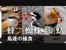 0112【鳥が蜘蛛ザリガニ蜂を捕食】小さな猛禽モズ、カイツブリ、ハクセキレイ。ジョウビタキが紫式部を、シジュウカラが種子を食べる。雨天撮影【 #今日撮り野鳥動画まとめ 】 #身近な生き物語