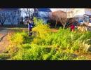 [大阪•南河内:音街ウナのお祭り実況]藤井寺市 惣社村のどんど焼き‼️