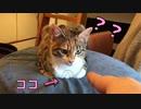 香箱座りの猫に指ズボした時の反応がこちら…w