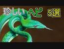 世界の珍しいヘビ5選【ゆっくり解説】