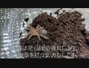 [注目!]タランチュラ飼育日記その62[捕食シーン]