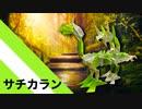 """【折り紙】「サチカラン」 35枚【幸多からんこと】/【origami】 """"Sachikaran"""" 35 pieces【I wish you all the best】"""