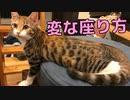 撫でられたくて変な座り方をする猫がいましたw