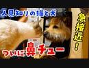 元野犬のポテと一緒にラム肉を食べたら、二人の仲が急接近しました【鼻チューかわいすぎ】