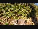木陰で休む野良猫に少し警戒されたが、次の瞬間に!?
