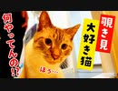 風呂場を覗き見する好奇心旺盛な猫が取った行動とは…!