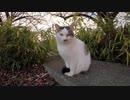 【ゴロゴロ】公園の野良猫をナデナデしてゴロゴロ喜ぶまでを撮影した動画