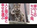 塀の上のキジトラ猫、縁と幸運を運んでくる