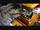 Youtubeにはまる猫