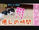 子猫保護19日目 段ボールで元気に遊ぶ姿に癒される  生後2ヶ月の子猫