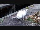【貴重映像】野良猫の○○○