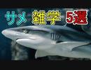 サメに関する雑学5選【ゆっくり解説】