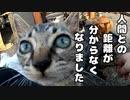 末っ子の子猫がかわいい【野良猫鶏肉騒動その2】