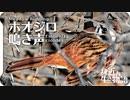 ホオジロの鳴き声02(オス)