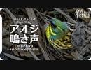 アオジの鳴き声01地鳴きオス birdsong of Black-faced Bunting  Emberiza spodocephala 青鵐、蒿鵐、蒿雀 鳥の鳴き声 身近な生き物語 アオジ