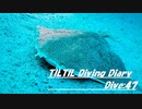 TILTIL diving diary:Dive47
