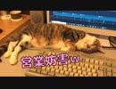 パソコン仕事中に目の前でくつろぐ猫がいました…w