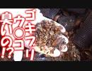 3000匹のゴキブリのウ○コを集めて臭いを嗅いでみた結果、、【掃除の方法も紹介】