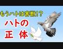 【平和の象徴】なぜ鳩だったのか…その秘密に迫ってみる!