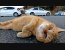 駐車場で茶トラ猫が何か話し掛けてきたのでナデナデするとゴロンゴロンと転がって喜んだ