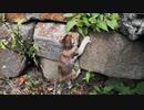 溝に落ちた子猫、石垣を必死に登り家族の所ヘ帰りつく