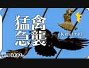 0209B【猛禽類チョウゲンボウを襲うカラス】ノスリ幼鳥。魚捕食鳥コサギ。シジュウカラ鳴き声。トモエガモ。オカヨシガモ求愛行動。ハシビロガモ。 #身近な生き物語 #チョウゲンボウ #トモエガモ