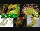 奇妙な食虫植物5選【ゆっくり解説】