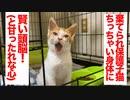 棄てられ保護子猫、珍獣とは一味違う賢さを見せる