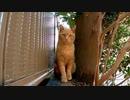【今週のボツ動画】短い野良猫動画まとめ公開【漁港や公園の地域猫】