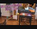 猫に自分の動画を見せてみたら反応が可愛かった…w