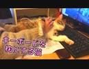 【営業妨害‼】PC前でかまってアピールする猫が仕事をさせてくれません…w