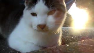 【ミニ動画( ¯꒳¯ )b】猫のお顔、アップ、アップ、アッ~プ!