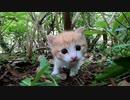 草むらで見掛けた子猫、超カワイイ!