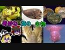 奇妙な海の生物5選【ゆっくり解説】