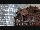 [グラビア撮影]タランチュラ飼育日記その97[私こそカメラマン]